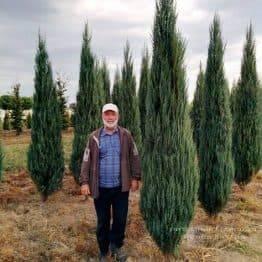Ялівець скельний Блю Арроу / Блю Ерроу (Juniperus scopolorum Blue Arrow) ФОТО Розплідник рослин Природа Priroda (107)