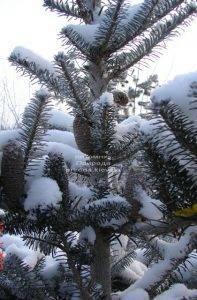 Питомник растений Природа зимой ФОТО (5)