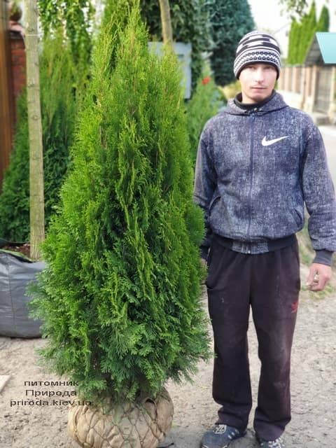 Туя западная Смарагд (Thuja occidentalis Smaragd) ФОТО Питомник растений Природа (75)